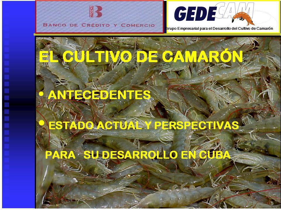 PERSPECTIVAS PARA EL DESARROLLO EN CUBA PREMISAS Y LINEAMIENTOS DE TRABAJO Continuar la construcción de camaroneras, desarrollando nuevas áreas de cultivo del potencial estudiado.