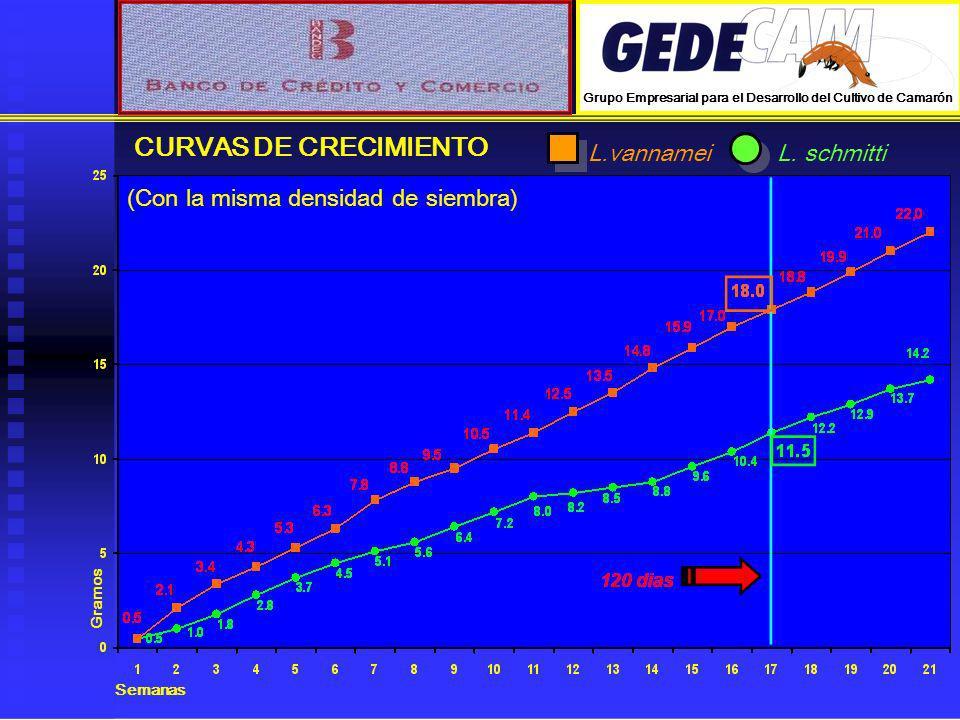 Gramos Semanas CURVAS DE CRECIMIENTO L.vannameiL. schmitti (Con la misma densidad de siembra) Grupo Empresarial para el Desarrollo del Cultivo de Cama