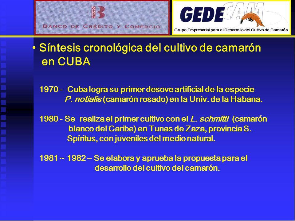 Síntesis cronológica del cultivo de camarón en CUBA 1970 - Cuba logra su primer desove artificial de la especie P. notialis (camarón rosado) en la Uni