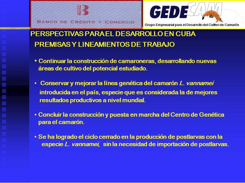 PERSPECTIVAS PARA EL DESARROLLO EN CUBA PREMISAS Y LINEAMIENTOS DE TRABAJO Continuar la construcción de camaroneras, desarrollando nuevas áreas de cul
