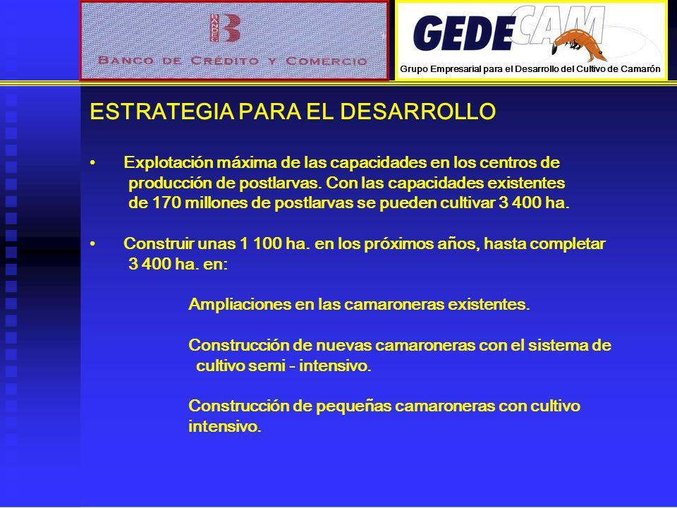 ESTRATEGIA PARA EL DESARROLLO Explotación máxima de las capacidades en los centros de producción de postlarvas. Con las capacidades existentes de 170