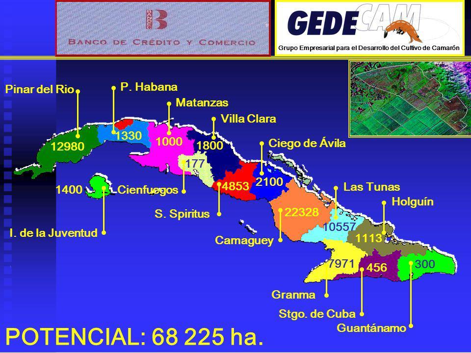 12980 Pinar del Rio 1330 P. Habana 1400 I. de la Juventud 1000 Matanzas 177 Cienfuegos 1800 Villa Clara 4853 S. Spiritus 2100 Ciego de Ávila 22328 Cam