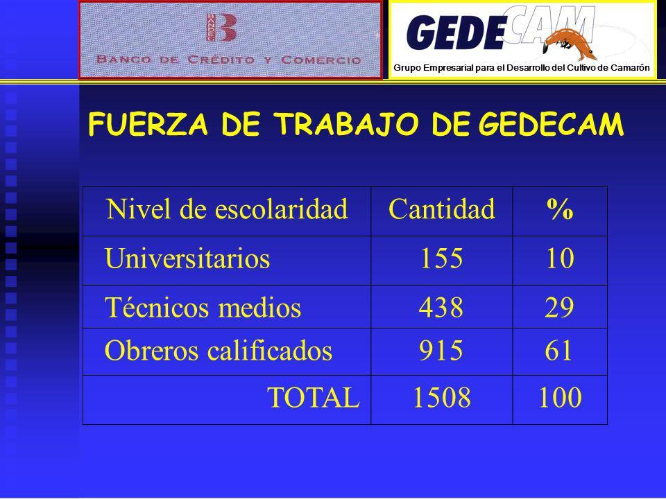 Nivel de escolaridadCantidad% Universitarios15510 Técnicos medios43829 Obreros calificados91561 TOTAL1508100 FUERZA DE TRABAJO DE GEDECAM Grupo Empres