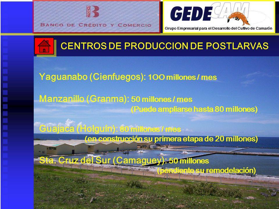 CENTROS DE PRODUCCION DE POSTLARVAS Yaguanabo (Cienfuegos): 1OO millones / mes Manzanillo (Granma): 50 millones / mes (Puede ampliarse hasta 80 millon