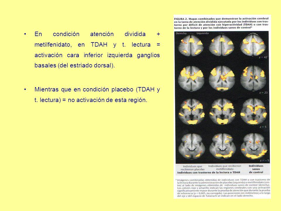 En condición atención dividida + metilfenidato, en TDAH y t. lectura = activación cara inferior izquierda ganglios basales (del estriado dorsal). Mien