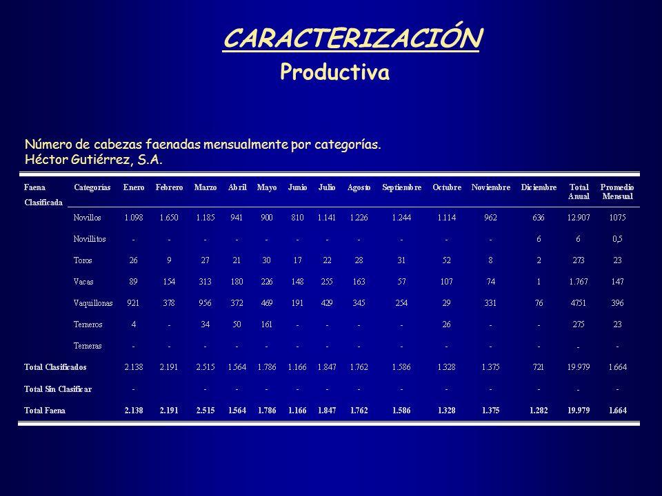 CARACTERIZACIÓN Productiva Número de cabezas faenadas mensualmente por categorías. Héctor Gutiérrez, S.A.