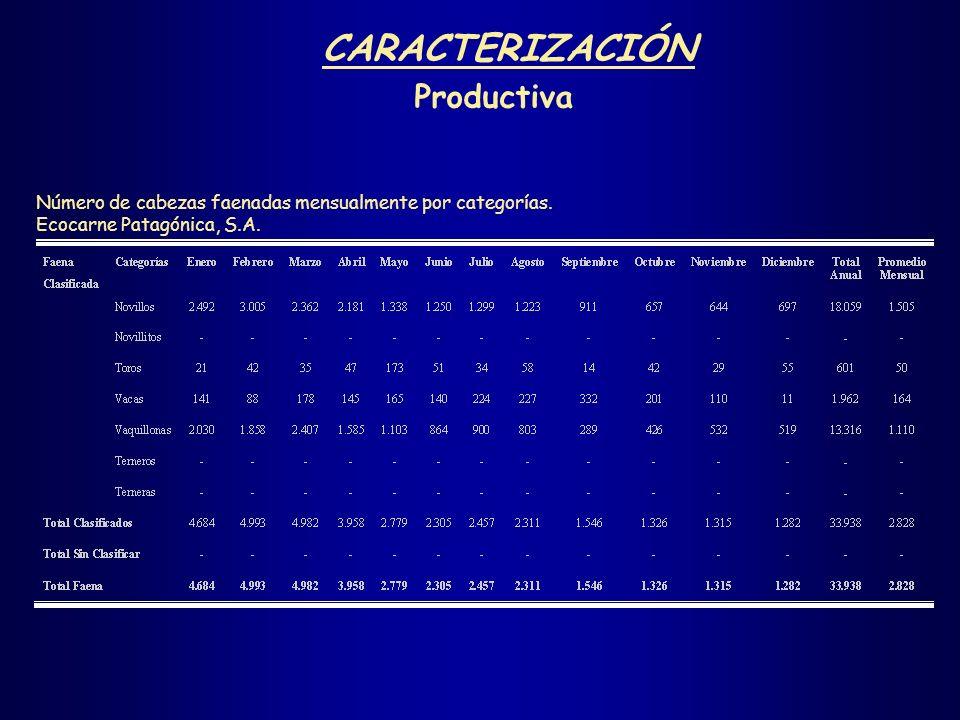 CARACTERIZACIÓN Productiva Número de cabezas faenadas mensualmente por categorías. Ecocarne Patagónica, S.A.
