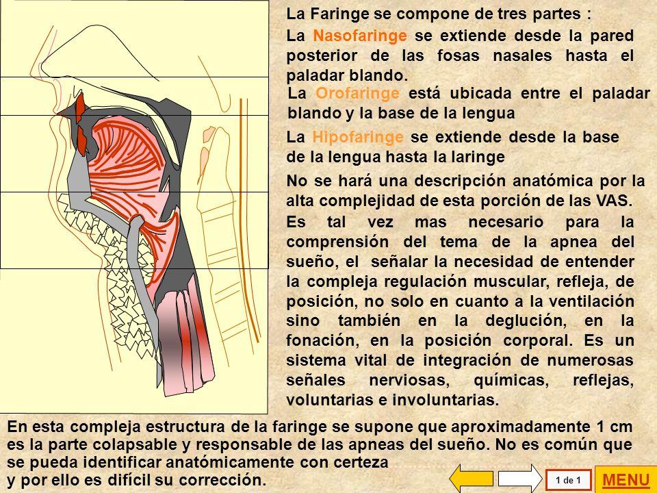 La obstrucción o congestión nasal puede: generar reflejos de interrupción de la ventilación (apnea central) inducir ventilación bucal y producir un es