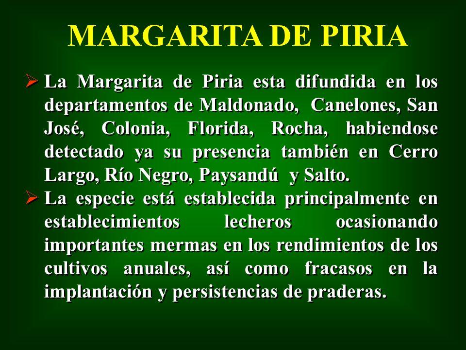 La Margarita de Piria esta difundida en los departamentos de Maldonado, Canelones, San José, Colonia, Florida, Rocha, habiendose detectado ya su prese
