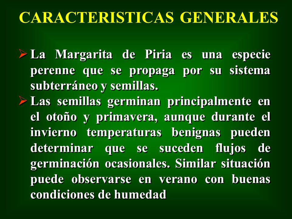CARACTERISTICAS GENERALES La Margarita de Piria es una especie perenne que se propaga por su sistema subterráneo y semillas. Las semillas germinan pri