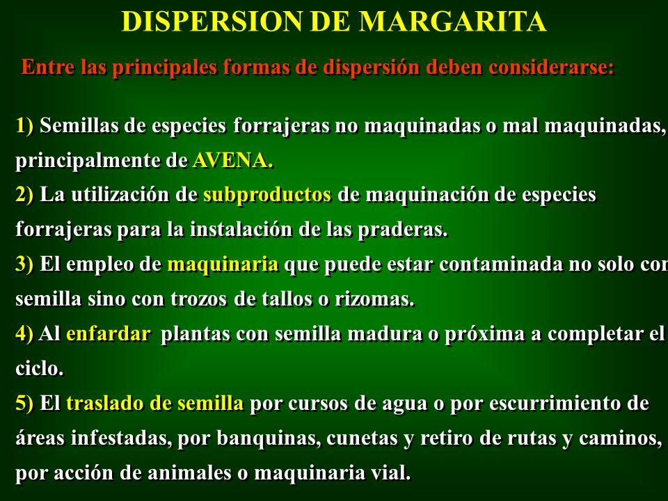 DISPERSION DE MARGARITA Entre las principales formas de dispersión deben considerarse: 1) Semillas de especies forrajeras no maquinadas o mal maquinad