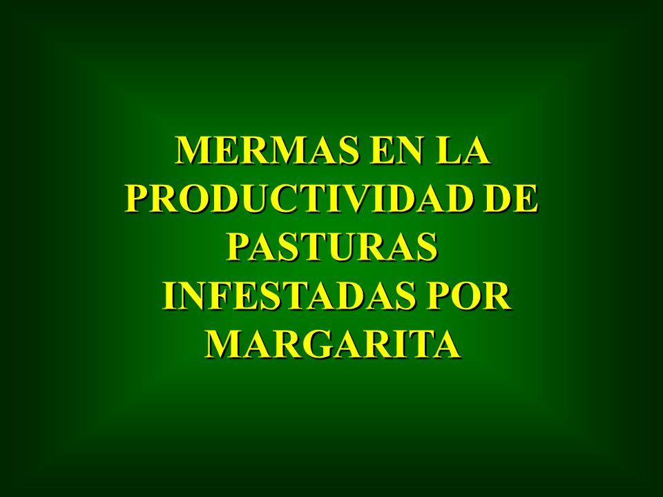 MERMAS EN LA PRODUCTIVIDAD DE PASTURAS INFESTADAS POR MARGARITA MERMAS EN LA PRODUCTIVIDAD DE PASTURAS INFESTADAS POR MARGARITA
