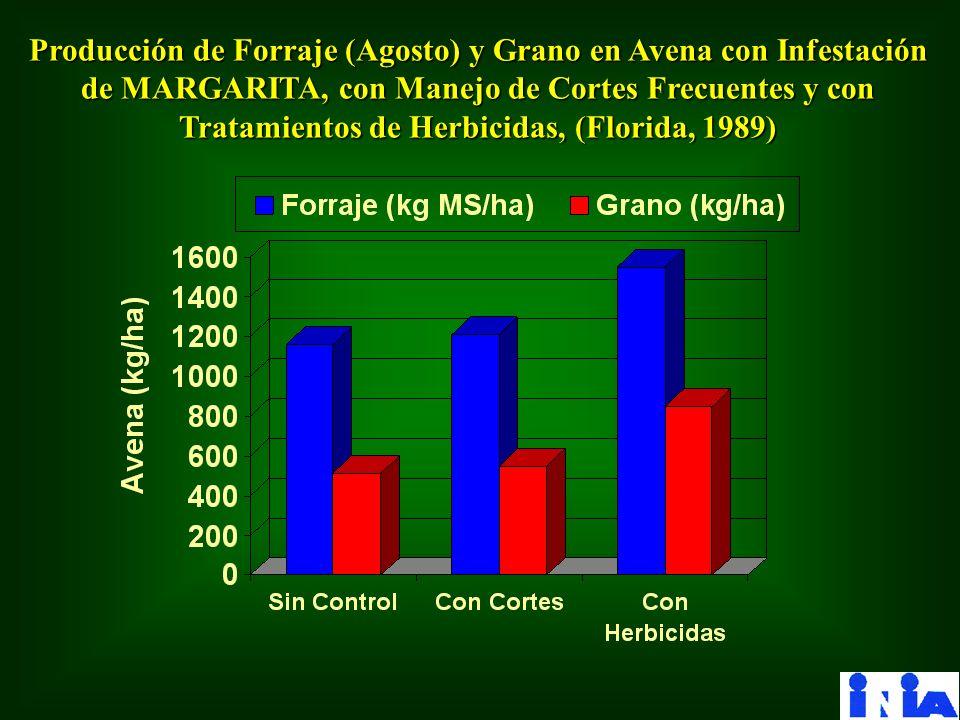 Producción de Forraje (Agosto) y Grano en Avena con Infestación de MARGARITA, con Manejo de Cortes Frecuentes y con Tratamientos de Herbicidas, (Flori