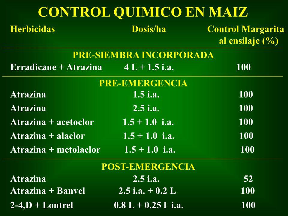 Herbicidas Dosis/ha Control Margarita al ensilaje (%) PRE-SIEMBRA INCORPORADA Atrazina 1.5 i.a. 100 Atrazina 2.5 i.a. 100 Atrazina + acetoclor 1.5 + 1