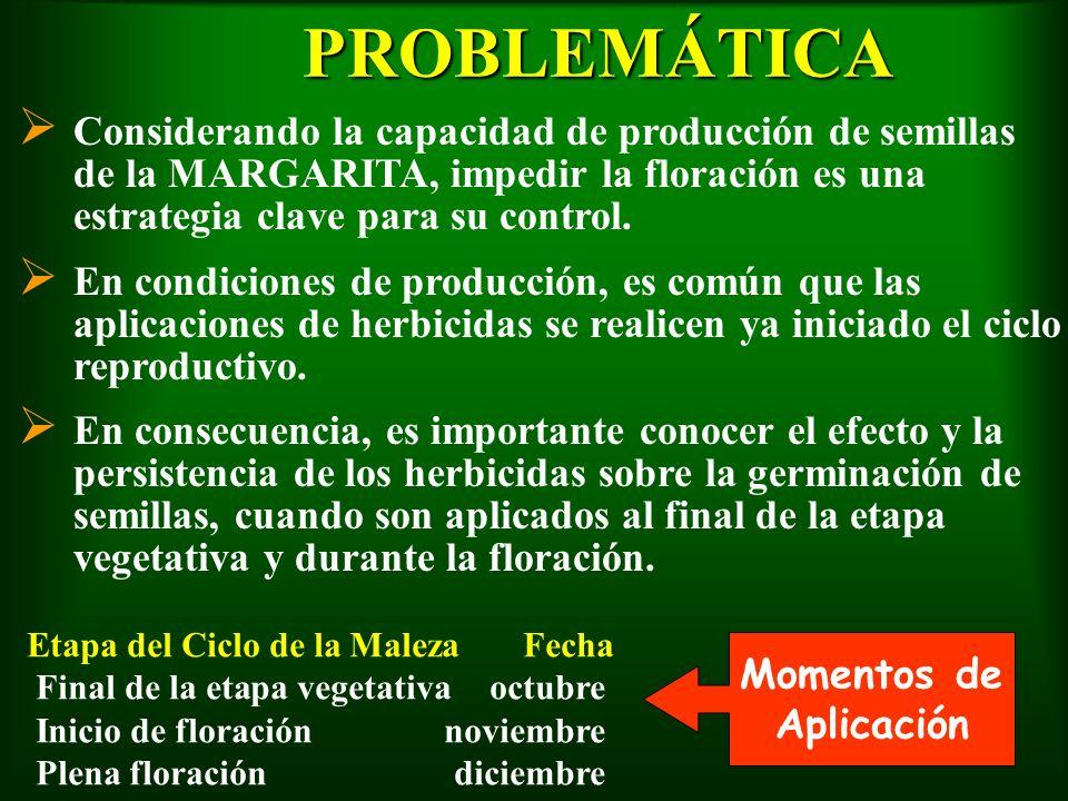 PROBLEMÁTICA Ø Considerando la capacidad de producción de semillas de la MARGARITA, impedir la floración es una estrategia clave para su control. Ø En