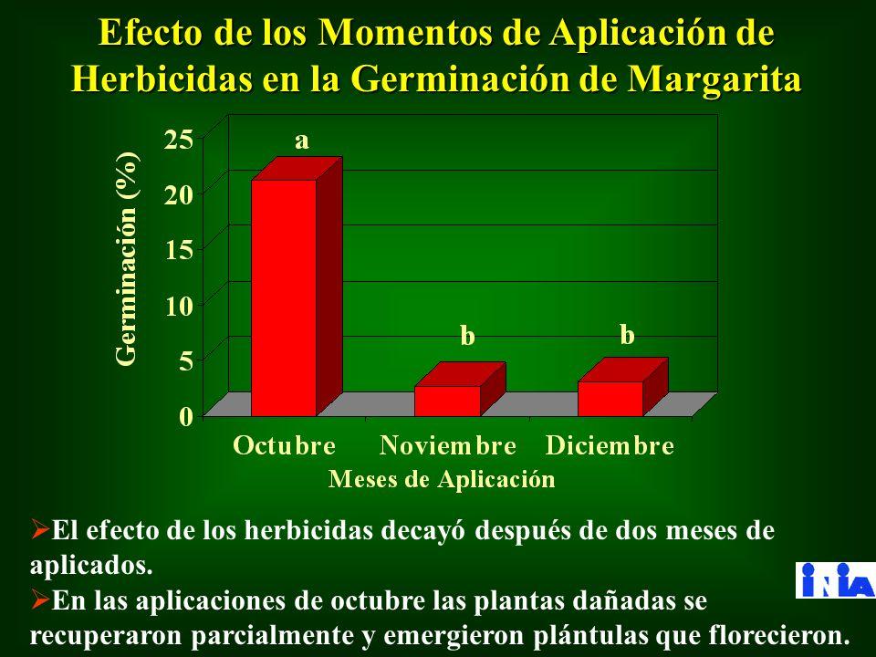 Efecto de los Momentos de Aplicación de Herbicidas en la Germinación de Margarita El efecto de los herbicidas decayó después de dos meses de aplicados