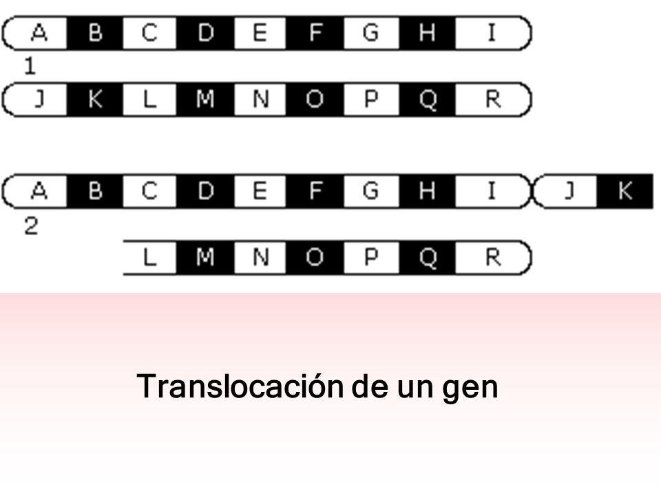 Translocación de un gen