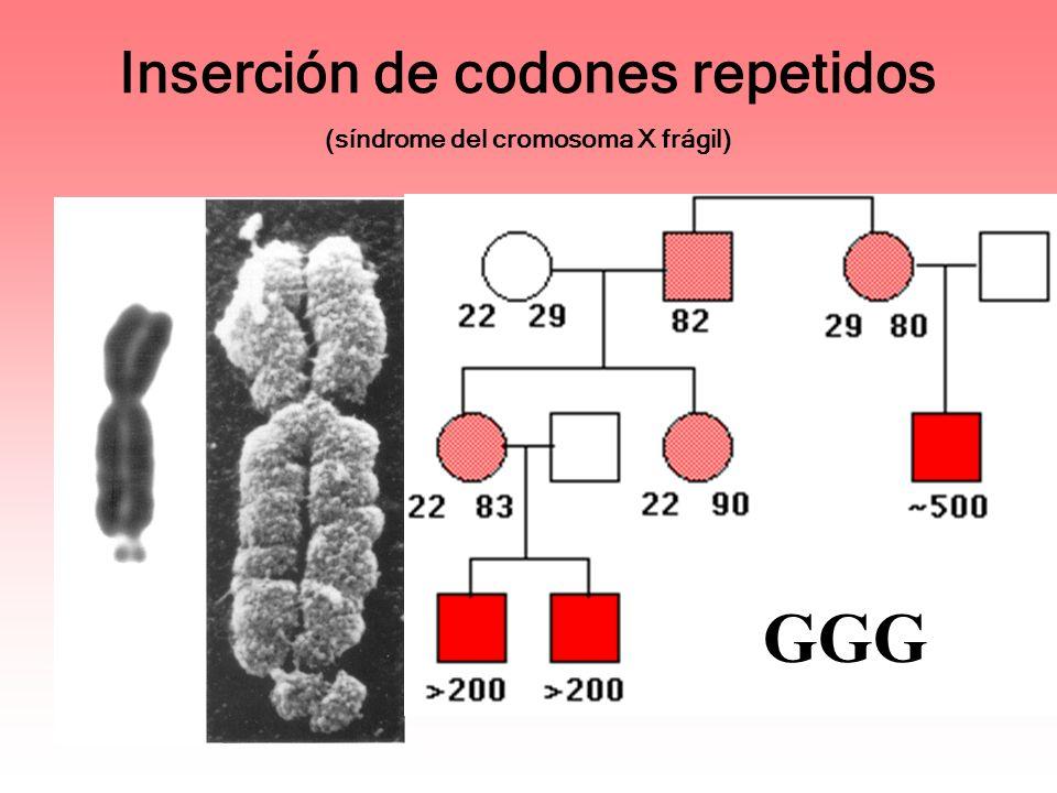 Inserción de codones repetidos (síndrome del cromosoma X frágil) GGG