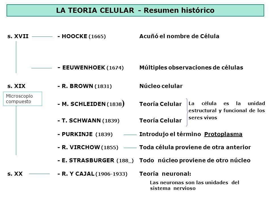 LA CÉLULA – ORGANIZACIÓN BÁSICA - Una membrana celular - Citoplasma o medio interno con estructuras fundamentales - Información genética (ADN) NIVELES DE ORGANIZACIÓN CELULAR - Células Procariotas - Células eucariotas - Organización mas simple - Sin núcleo diferenciado - ADN circular bicatenario - Sin orgánulos complejos - Todos los seres del reino Moneras - Más complejas - Con núcleo diferenciado - con membrana nuclear - ADN asociado a proteínas histonas - Orgánulos complejos formados por membranas - Reino Protoctista, Fungi, Vegetal y Animal
