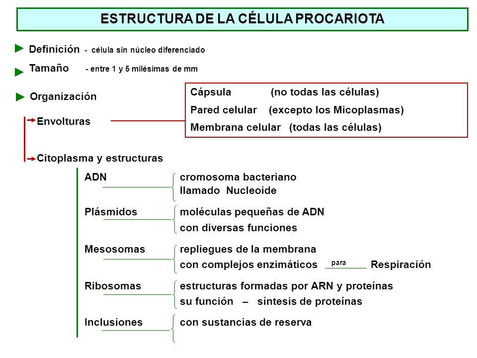Envolturas Cápsula (no todas las células) Pared celular (excepto los Micoplasmas) Membrana celular (todas las células) Definición - célula sin núcleo