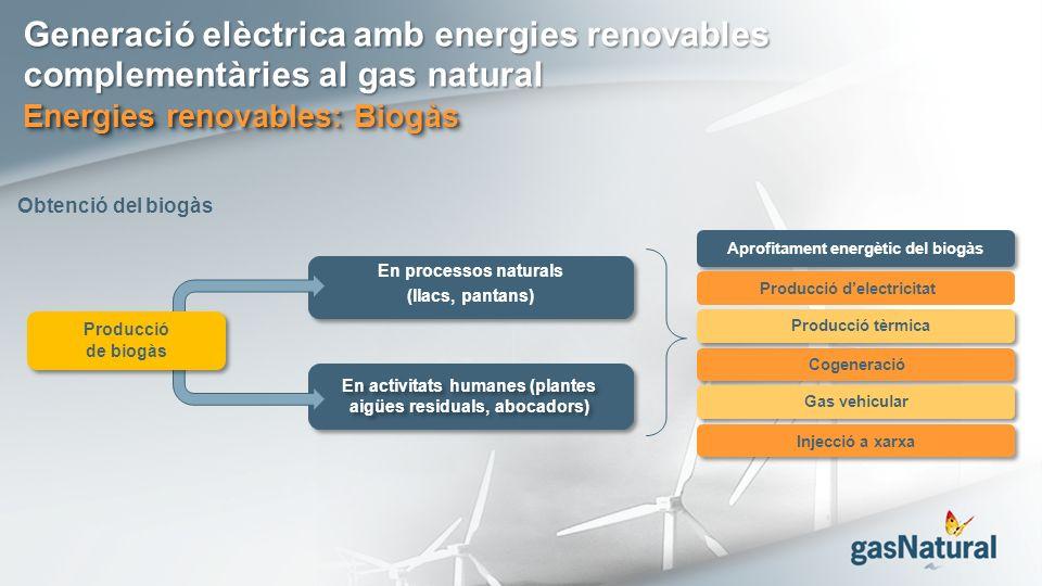 Generació elèctrica amb energies renovables complementàries al gas natural Energies renovables: Biogàs Aprofitament energètic del biogàs Producció tèrmica Producció delectricitat Cogeneració Gas vehicular Injecció a xarxa En processos naturals (llacs, pantans) En activitats humanes (plantes aigües residuals, abocadors) Producció de biogàs Obtenció del biogàs