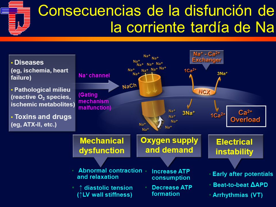 Consecuencias de la disfunción de la corriente tardía de Na Diseases (eg, ischemia, heart failure) Pathological milieu (reactive O 2 species, ischemic metabolites) Toxins and drugs (eg, ATX-II, etc.) Na + channel (Gating mechanism malfunction) Increase ATP consumption Decrease ATP formation Oxygen supply and demand Abnormal contraction and relaxation diastolic tension ( LV wall stiffness) Mechanical dysfunction Early after potentials Beat-to-beat Δ APD Arrhythmias (VT) Electrical instability