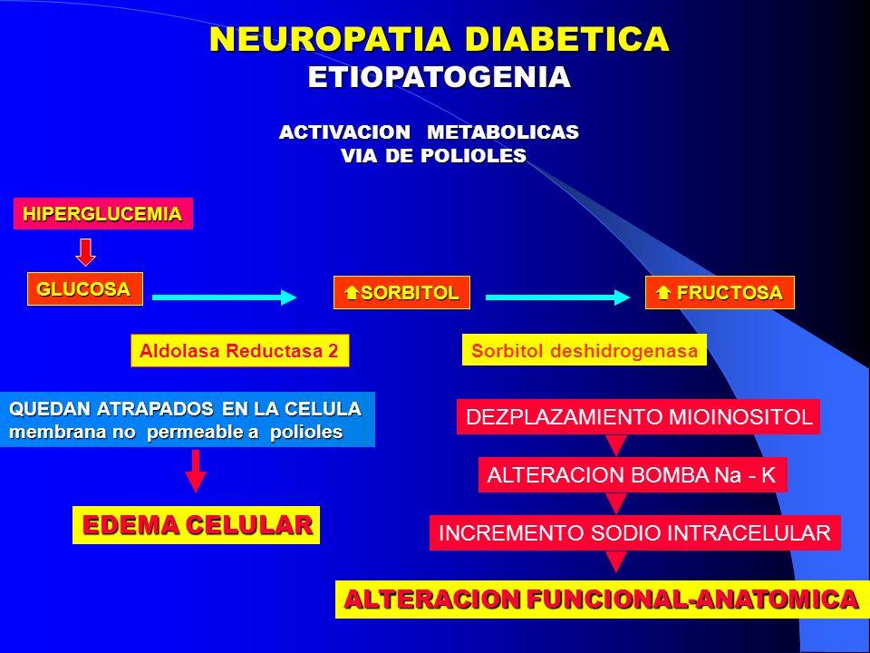 NEUROPATIA DIABETICA ETIOPATOGENIA FACTORES METABOLICOS NEUROPATIA DIABETICA ETIOPATOGENIA FACTORES METABOLICOS Aumento Sorbitol y Fructosa Aumento Sodio Intracelular Disminucion del Oxido Nitrico Aumento del Stress Oxidativo Glicacion no enzimatica de las proteinas