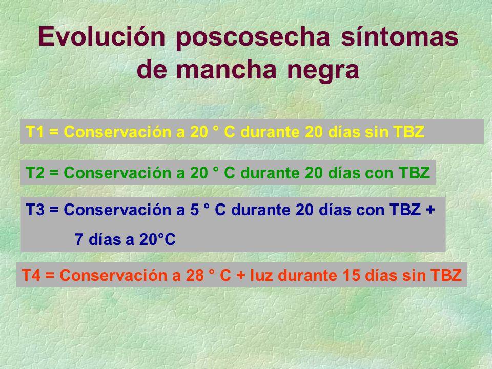 T1 = Conservación a 20 ° C durante 20 días sin TBZ T2 = Conservación a 20 ° C durante 20 días con TBZ T4 = Conservación a 28 ° C + luz durante 15 días sin TBZ T3 = Conservación a 5 ° C durante 20 días con TBZ + 7 días a 20°C Evolución poscosecha síntomas de mancha negra