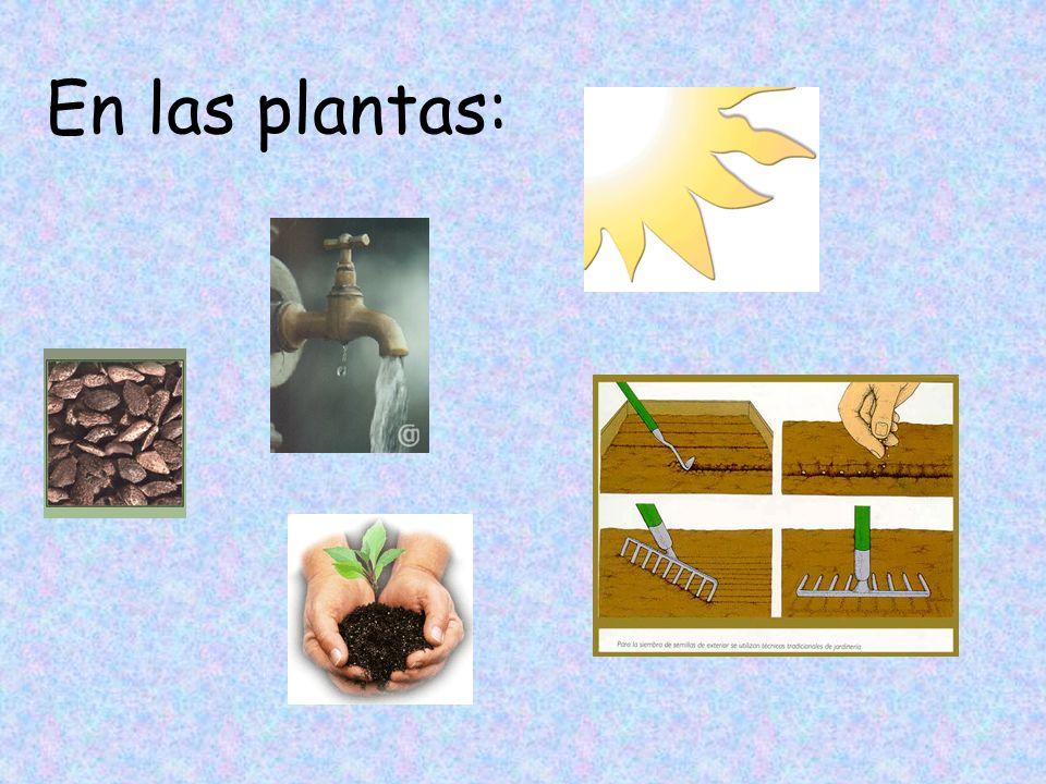 En las plantas: