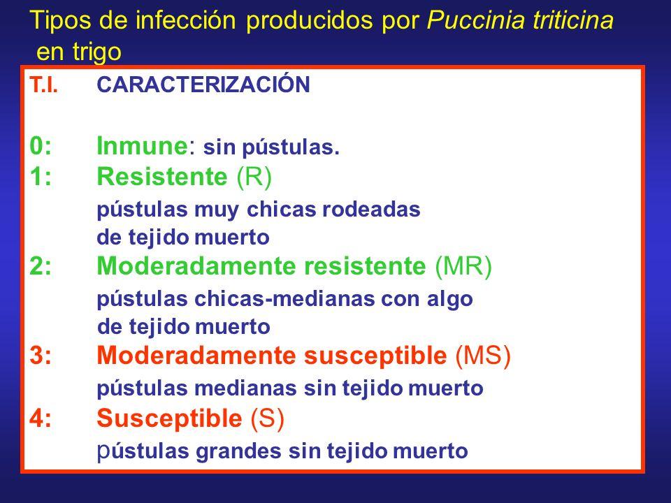 Tipos de infección producidos por Puccinia triticina en trigo T.I.CARACTERIZACIÓN 0: Inmune: sin pústulas. 1: Resistente (R) pústulas muy chicas rodea