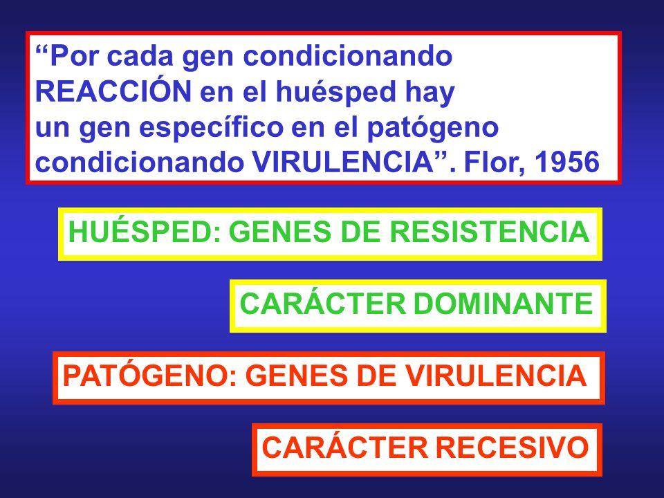 Por cada gen condicionando REACCIÓN en el huésped hay un gen específico en el patógeno condicionando VIRULENCIA. Flor, 1956 HUÉSPED: GENES DE RESISTEN