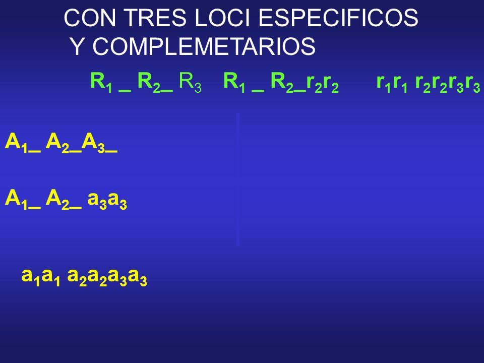 R 1 _ R 2 _ R 3 r 1 r 1 r 2 r 2 r 3 r 3 A 1 _ A 2 _A 3 _ a 1 a 1 a 2 a 2 a 3 a 3 R 1 _ R 2 _r 2 r 2 A 1 _ A 2 _ a 3 a 3 CON TRES LOCI ESPECIFICOS Y CO