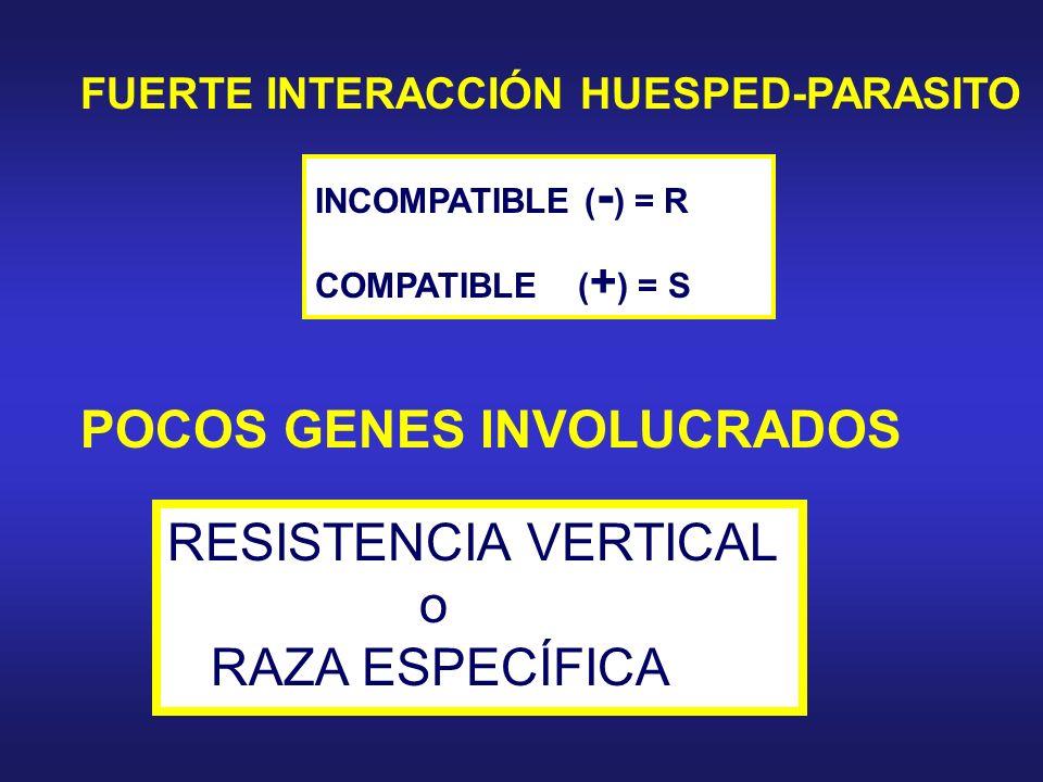FUERTE INTERACCIÓN HUESPED-PARASITO INCOMPATIBLE ( - ) = R COMPATIBLE ( + ) = S POCOS GENES INVOLUCRADOS RESISTENCIA VERTICAL o RAZA ESPECÍFICA