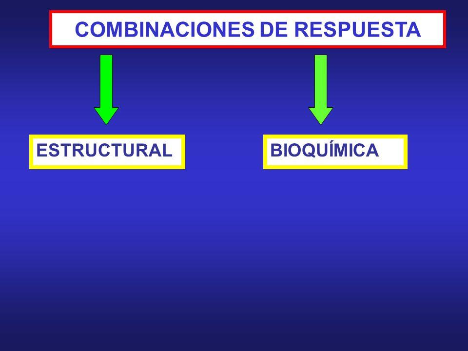RESPUESTAS FISIOLÓGICAS ESTRUCTURAS DE RESPUESTAS COMPOSICIÓN QUÍMICA RESISTENCIA PROCESOS BIOQUÍMICOS