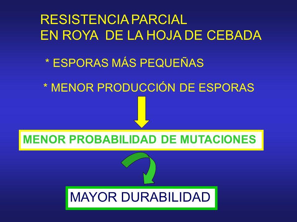 RESISTENCIA PARCIAL EN ROYA DE LA HOJA DE CEBADA * ESPORAS MÁS PEQUEÑAS * MENOR PRODUCCIÓN DE ESPORAS MENOR PROBABILIDAD DE MUTACIONES MAYOR DURABILID