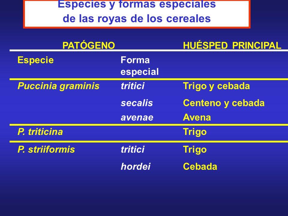 Especies y formas especiales de las royas de los cereales PATÓGENOHUÉSPED PRINCIPAL EspecieForma especial Puccinia graministriticiTrigo y cebada secal