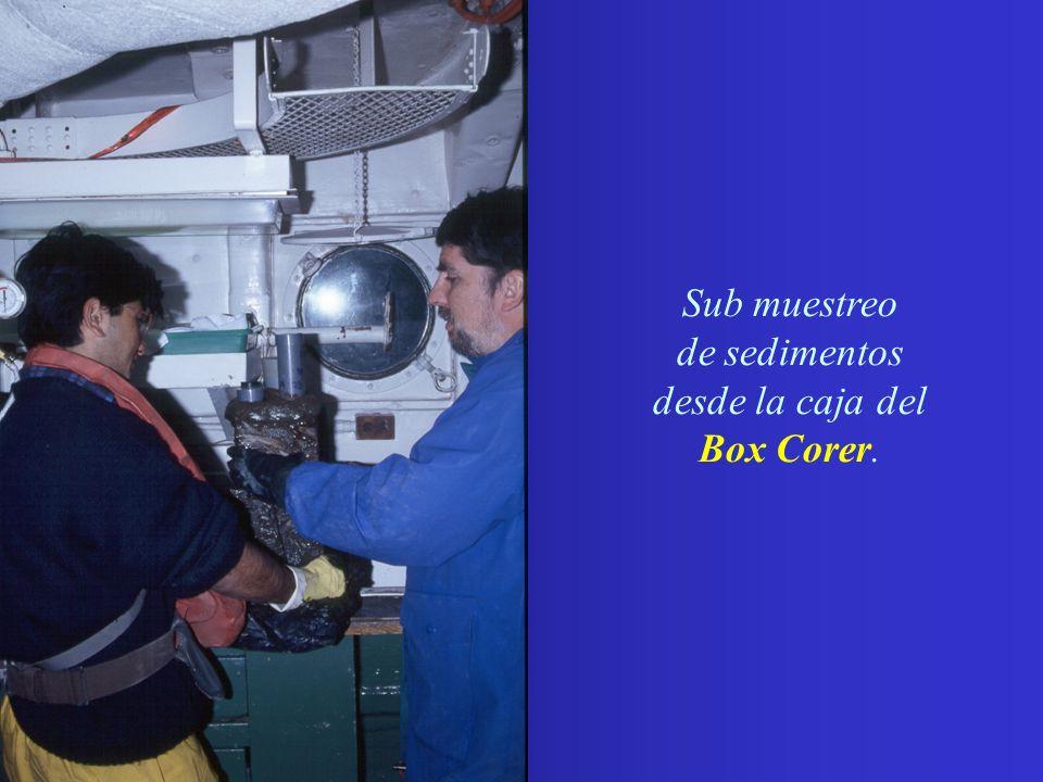 Fotografías por: N. Silva, FACH y P. Uribe