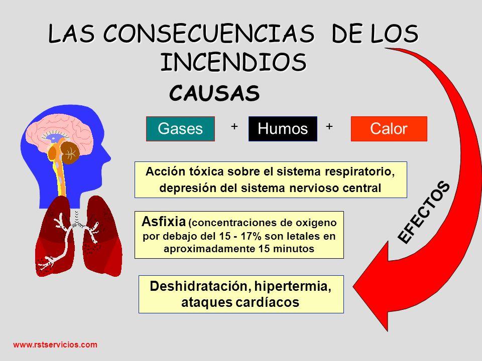 www.rstservicios.com GasesHumosCalor Acción tóxica sobre el sistema respiratorio, depresión del sistema nervioso central Deshidratación, hipertermia, ataques cardíacos CAUSAS EFECTOS Asfixia (concentraciones de oxigeno por debajo del 15 - 17% son letales en aproximadamente 15 minutos LAS CONSECUENCIAS DE LOS INCENDIOS ++