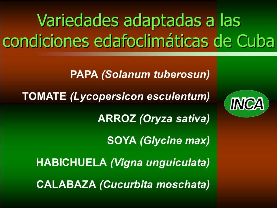 PAPA (Solanum tuberosun) TOMATE (Lycopersicon esculentum) ARROZ (Oryza sativa) SOYA (Glycine max) HABICHUELA (Vigna unguiculata) CALABAZA (Cucurbita moschata) Variedades adaptadas a las condiciones edafoclimáticas de Cuba