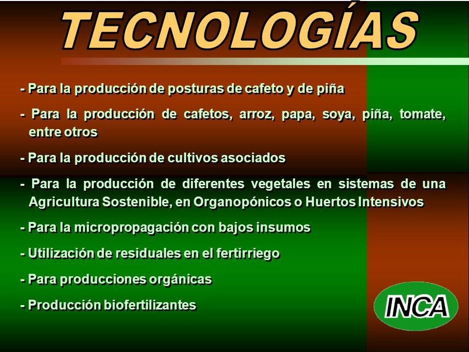 - Para la producción de posturas de cafeto y de piña - Para la producción de cafetos, arroz, papa, soya, piña, tomate, entre otros - Para la producción de cultivos asociados - Para la producción de diferentes vegetales en sistemas de una Agricultura Sostenible, en Organopónicos o Huertos Intensivos - Para la micropropagación con bajos insumos - Utilización de residuales en el fertirriego - Para producciones orgánicas - Producción biofertilizantes - Para la producción de posturas de cafeto y de piña - Para la producción de cafetos, arroz, papa, soya, piña, tomate, entre otros - Para la producción de cultivos asociados - Para la producción de diferentes vegetales en sistemas de una Agricultura Sostenible, en Organopónicos o Huertos Intensivos - Para la micropropagación con bajos insumos - Utilización de residuales en el fertirriego - Para producciones orgánicas - Producción biofertilizantes