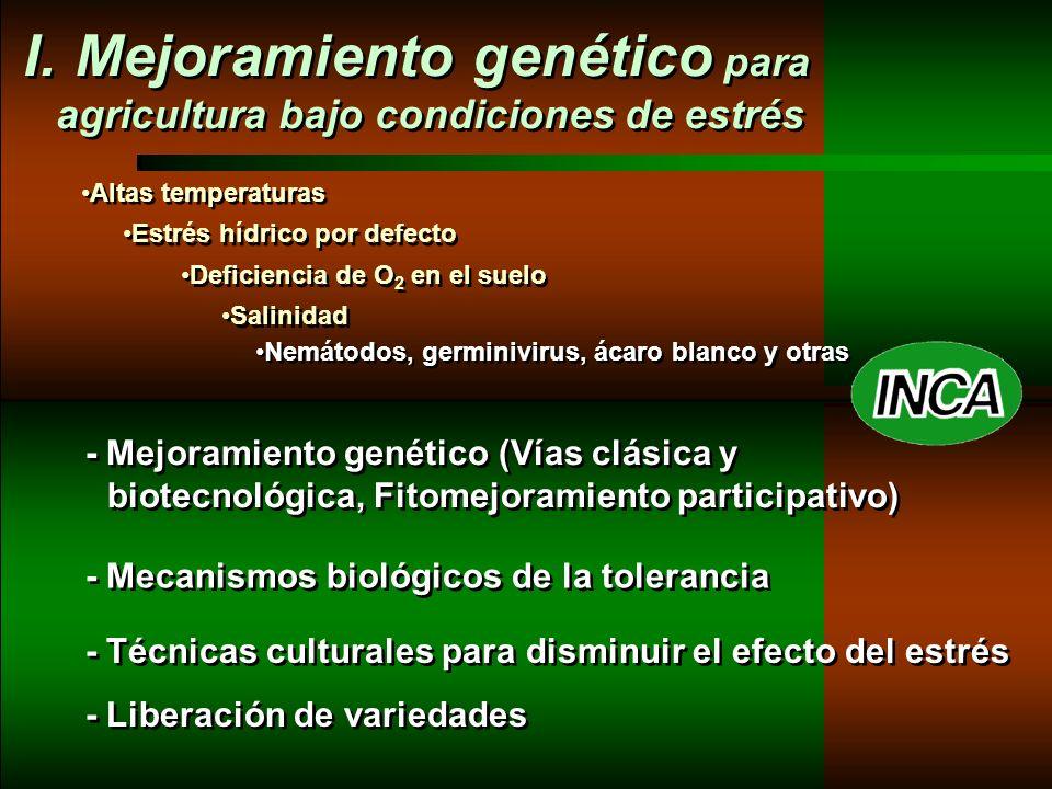 Lina INCA LD