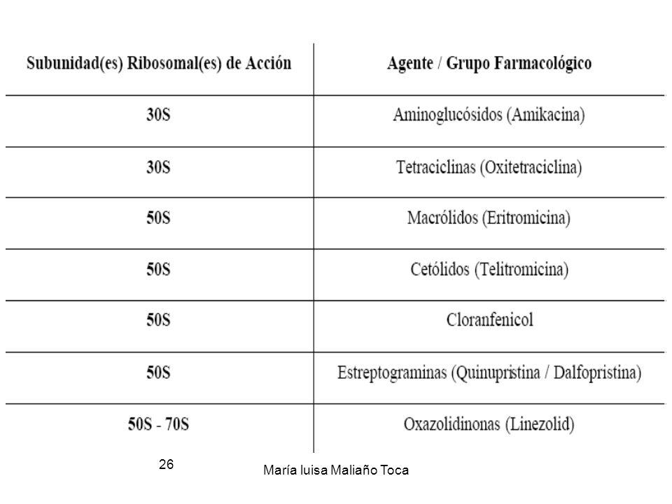 María luisa Maliaño Toca 25 3.-Puntos diana 2.-Inhibidores de Síntesis Proteica (ribosomas) 3.-Puntos diana 3. 2.-Inhibidores de Síntesis Proteica (ri