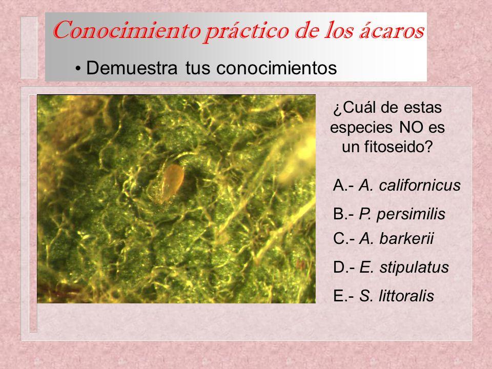 ¿Cuál de estas especies NO es un fitoseido? A.- A. californicus B.- P. persimilis C.- A. barkerii D.- E. stipulatus E.- S. littoralis Conocimiento prá