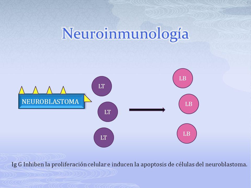 NEUROBLASTOMA LB LT LB Ig G Inhiben la proliferación celular e inducen la apoptosis de células del neuroblastoma.