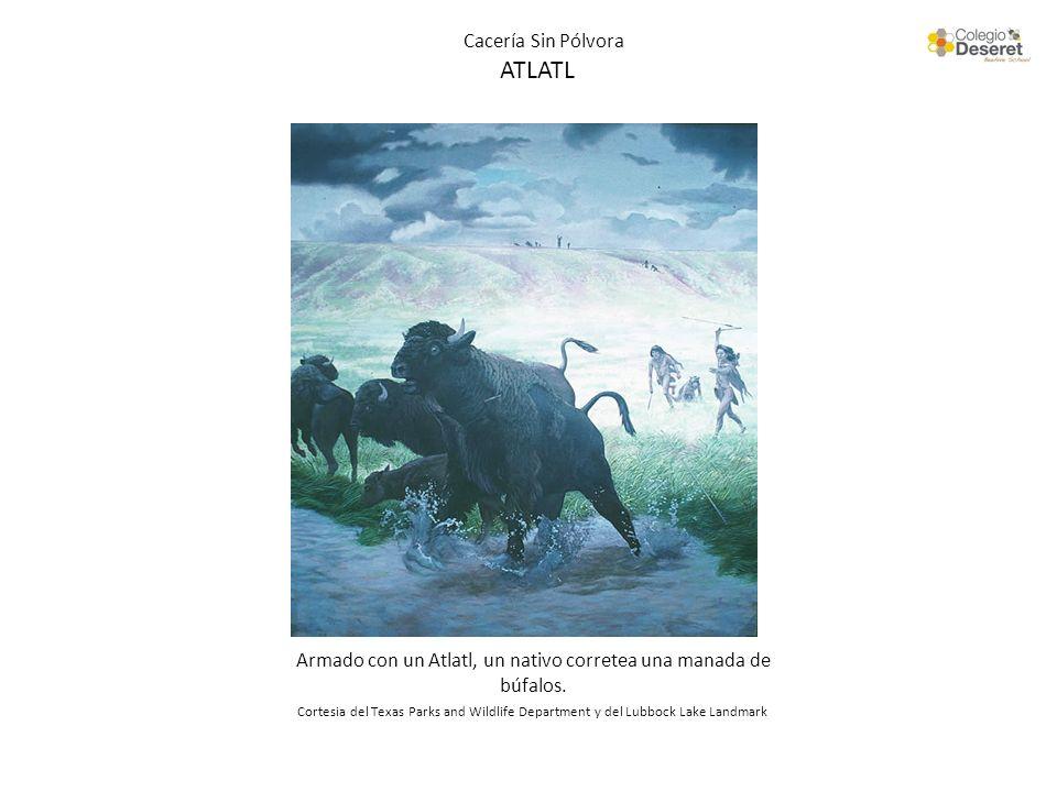 Cacería Sin Pólvora ATLATL Armado con un Atlatl, un nativo corretea una manada de búfalos. Cortesia del Texas Parks and Wildlife Department y del Lubb