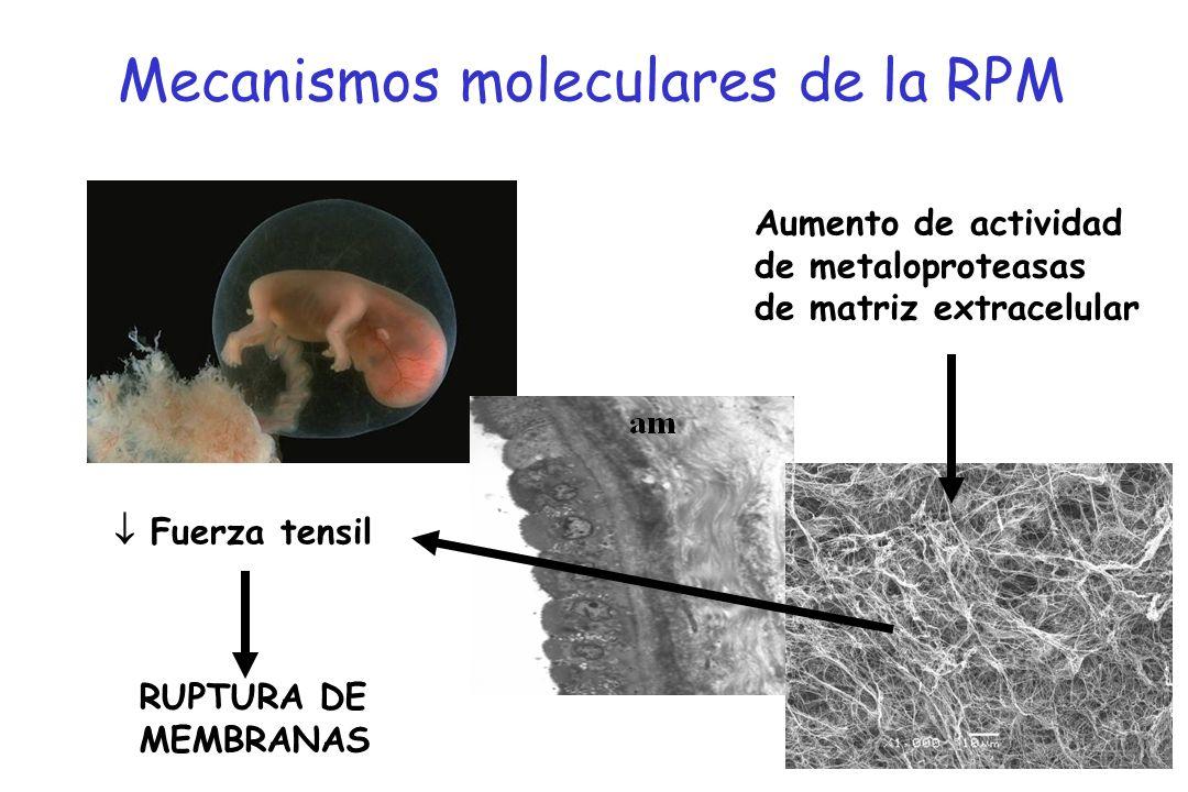 Mecanismos moleculares de la RPM Aumento de actividad de metaloproteasas de matriz extracelular Fuerza tensil RUPTURA DE MEMBRANAS
