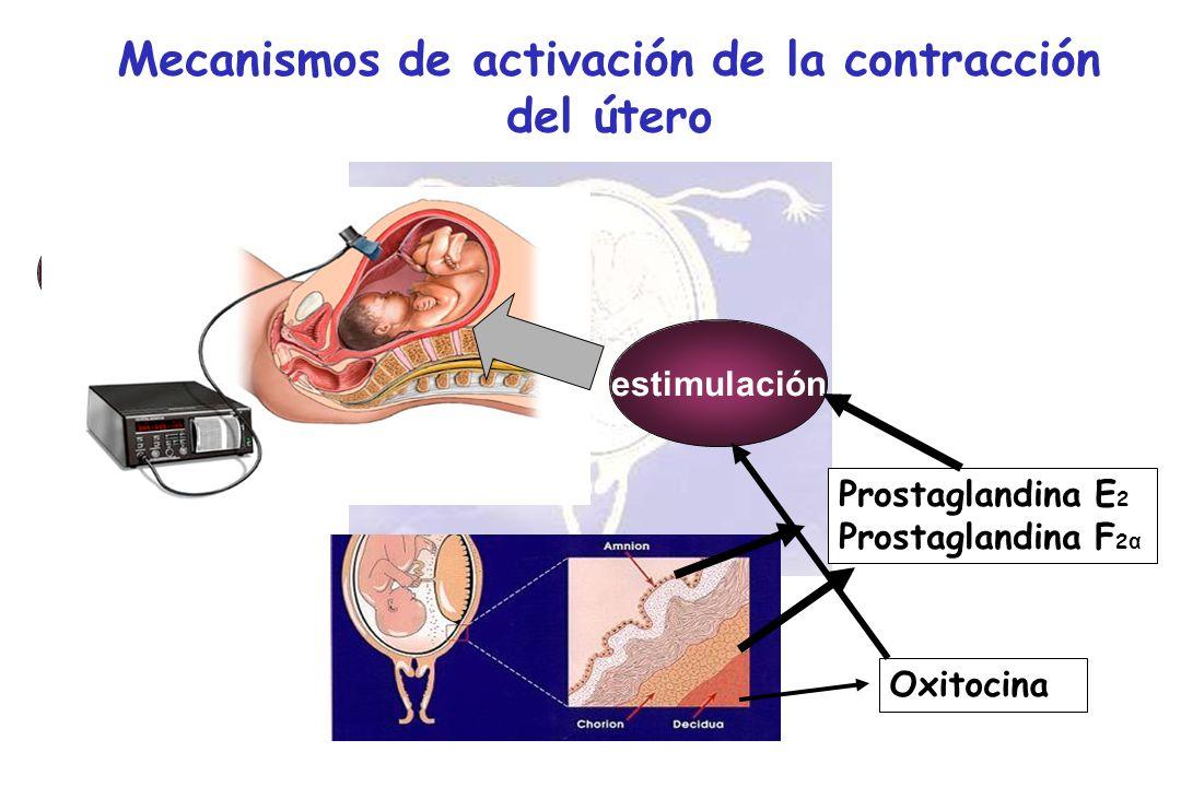 quiescencia Mecanismos de activación de la contracción del útero activaciónestimulación Prostaglandina E 2 Prostaglandina F 2 α Oxitocina