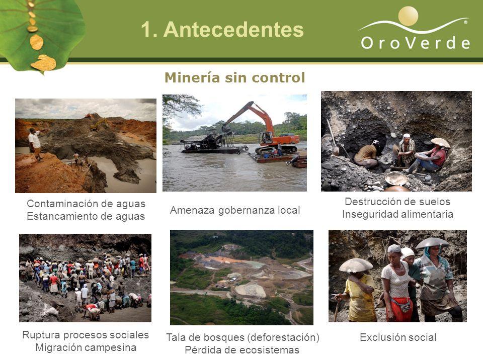 1. Antecedentes Minería sin control Contaminación de aguas Estancamiento de aguas Amenaza gobernanza local Tala de bosques (deforestación) Pérdida de