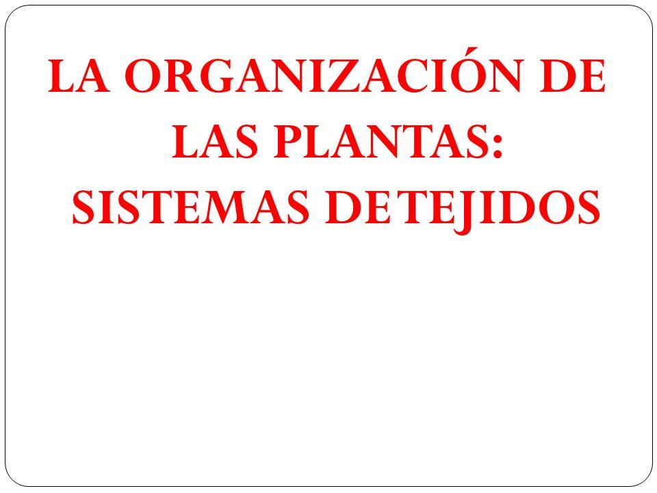LA ORGANIZACIÓN DE LAS PLANTAS: SISTEMAS DE TEJIDOS
