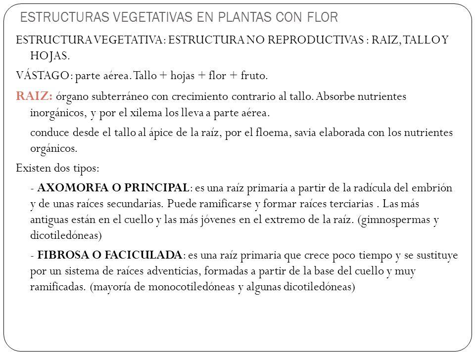 ESTRUCTURAS VEGETATIVAS EN PLANTAS CON FLOR ESTRUCTURA VEGETATIVA: ESTRUCTURA NO REPRODUCTIVAS : RAIZ, TALLO Y HOJAS.